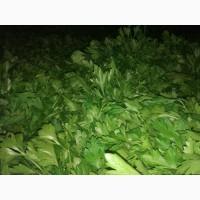 Продам зелень петрушки, можлива доставка