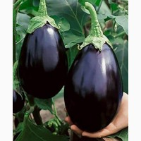 Продам семена Баклажан Черный красавчик