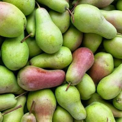 Продам грушу сорта Талгарка оптом, Винницкая обл.