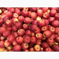 Яблоки с садов Польши, компания Fruitland pl