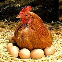 Комбикорм для кур-несушек 15-45 недель