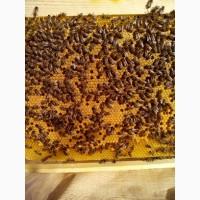 Пропоную бджолопакети на 2021 рiк