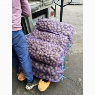 Семенной картофель 7 грн