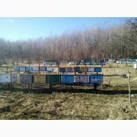 Продам в добрі рукі своіх бджілок