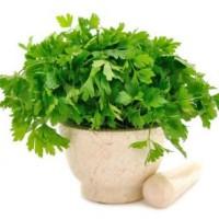 Салат, зелень мелким оптом петрушка укроп фризе, айсберг, латук, ромен, россо, бионда