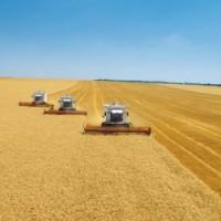 Купуємо пшеницю.Самовивіз за домовленістю