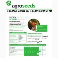 Гибрид кукурузы Pleven / Плевен ФАО 270 - Maisadour Semences / Agroseeds - Агротрейд