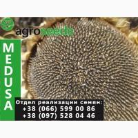Гибрид французской селекции - Медуза (Устойчивость к заразихе: G+)