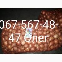 Лук мелкий 4-5 см