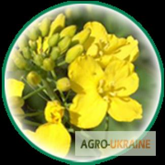 Семена озимого и ярового рапса от производителя Euralis Semences (Евралис Семанс)