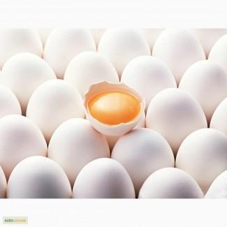 Свежие яйца категории С-1 и С-0