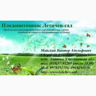 Саженцы,Саджанці Плодопитомник Летичев- Сад