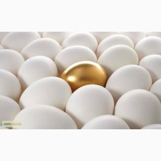 Якісні и свіжі яйця категорії С-1 і С-0