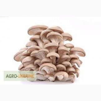Продаем оптом и в розницу свежие грибы вешенки