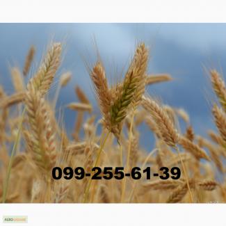 Закупаем -фуражную пшеницу и ячмень с доставкой в Николаев.Быстрая оплата.Дорого