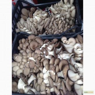 Реализуем грибы Вешенка