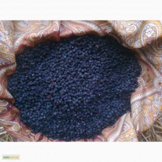 Ягоды черники сушеные