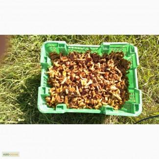 Продам лисички солёные