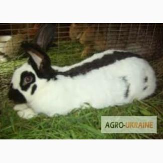 Продам кролів, різних порід