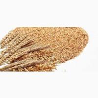 Куплю висівки пшеничні від 20 тонн! 1 Форма