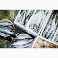 Куплю свежемороженую рыбу оптом в ассортименте