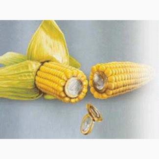 Семена кукурузы СИ Импульс