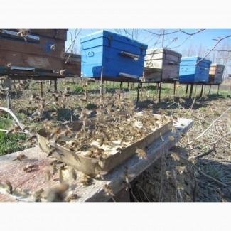 Белково - витаминная добавка для весенней подкормки пчел от производителя