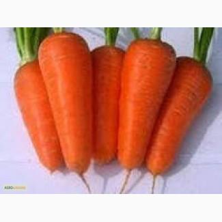 Продам семена морковки, Одесса + доставка почтой по Украине