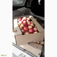 Продам яблоко Айдарет 150т 6+ /7