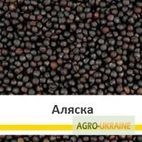 Семена рапса Чорний Велетень