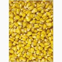 Закупаю кукурузу за грн/$$$