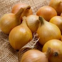 Продам семена лука репчатого Галант Италия Allium