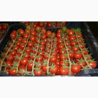 Продаем помидоры черри оптом, мелким оптом