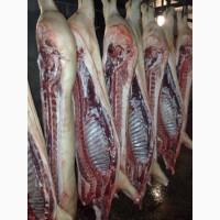 Продам свинину в полутушах беконного направления, оптом и в розницу