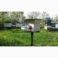Продам бджолосім#039;ї, бджолопакети