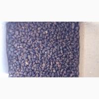 Продам орех кедровый крупный нечищенный