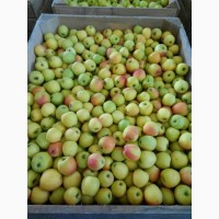 Продам Яблоки от производителя есть 1 и 2ой сорт