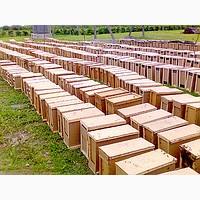 Продаю пчелопакеты Карпатка с доставкой по Украине