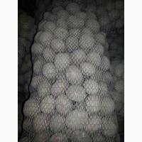 Продам качественный семенной картофель