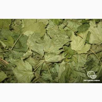 Куплю листя чорної смородини
