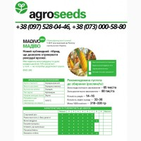 Гибрид кукурузы Madivo / Мадиво ФАО 340 - Maisadour Semences / Agroseeds - Агротрейд
