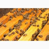 Продам Пчелопакеты Карпатка матка 2019