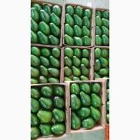 Продамо авокадо з Домінікани