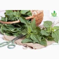 Куплю верхівки кропиви, листя кропиви, траву кропиви(сухі)