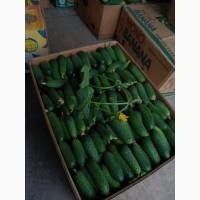 Продам огірок корнішон. Сорт амур, арктика