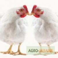 Комбикорм для цыплят-бройлеров ПК 6-4, возраст от 31 до 61 дней