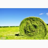 Бесплатная доставка сена в тюках (луговое, люцерна)