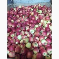Продамо яблуко