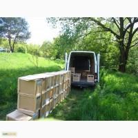 Пчелопакеты на апрель с доставкой по всей Украине, пчеломатки - карпатка 2021