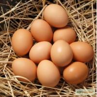 Продам яйца куриные домашние 1.8грн 1.6 опт